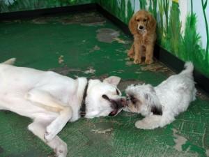 Kelly's Training Doggie DayCare