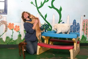 Kelly's Training Dog Daycare and Boarding pups love the indoor play area